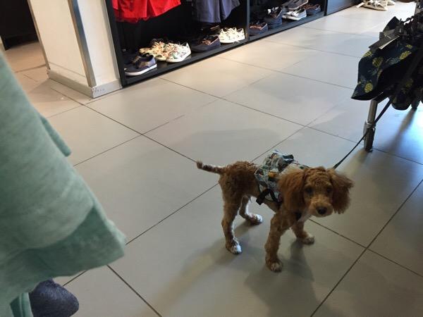 Auch Hund trägt Mode