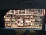Der Chinese – ein Tierfreund
