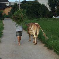 Homestay – das Dorf