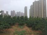 Mitten in Changsha