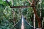 Baumwipfelpfad Malaysia