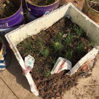 Stilvolle Gartenarbeit