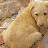 Nepals Hunde