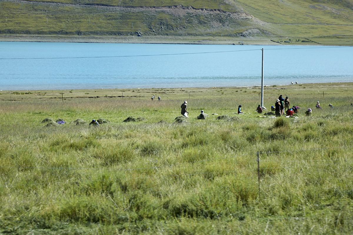 2langnasen_tibetnamco_210.jpg